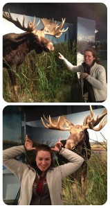 Laura and a moose at the Prince of Wales Northern Heritage Centre