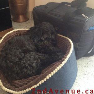 Sofie's luggage